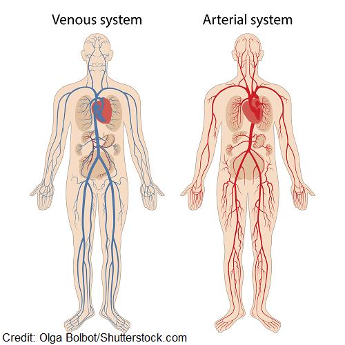 Vascular structure